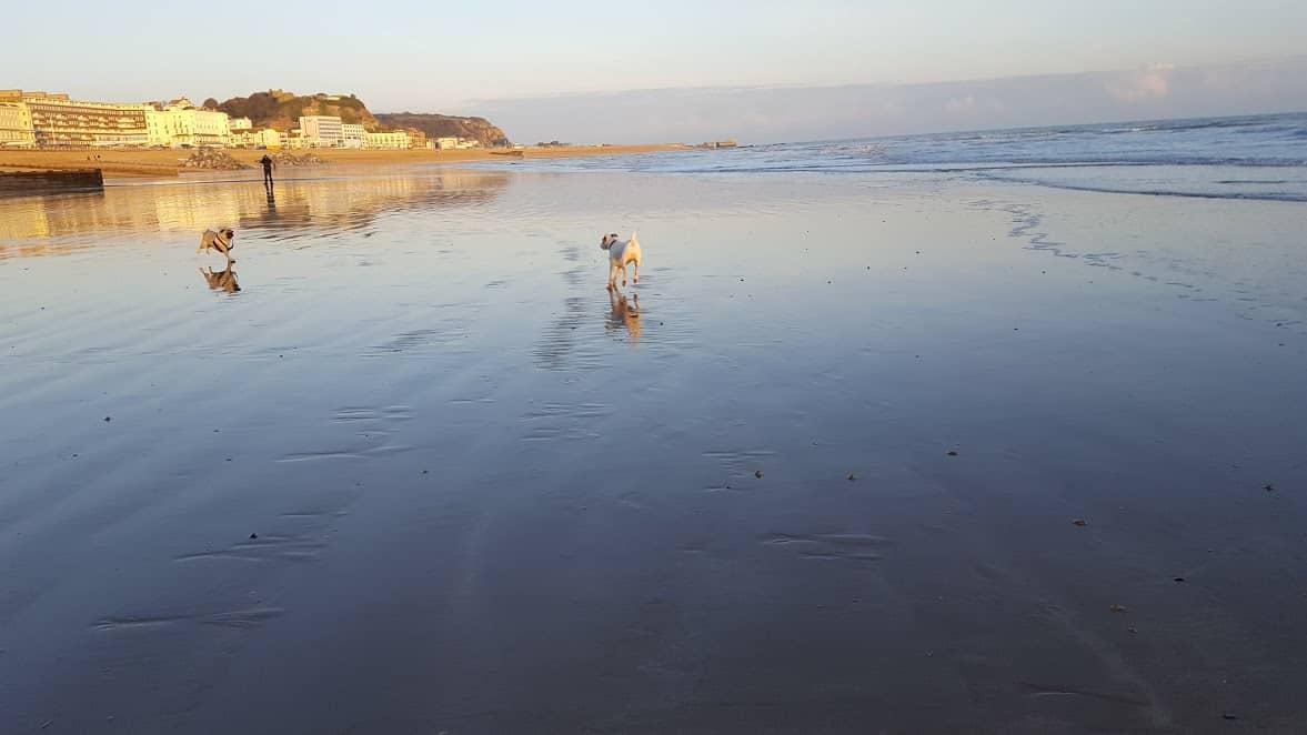 Hastings Beach Dogs
