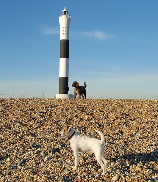 Dungeness - Dog Walking - St Leonards - Fairlight - Hastings Pet Care