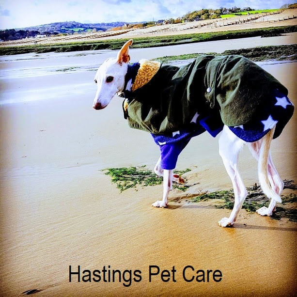 Peggy - Rocky - St Leonards and Hastings Dog Walker