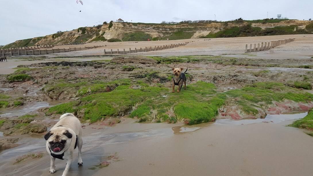 Pett Level Beach - Dog Walking