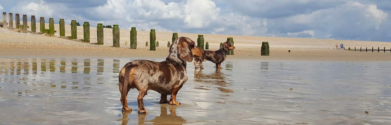 Hastings Pet Care - Dog Walking - Adventures at Winchelsea Beach