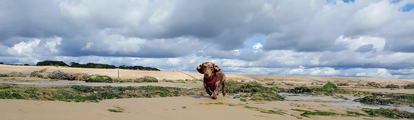 Pett Level Dog Walking - Hastings Pet Care - St Leonards and Fairlight