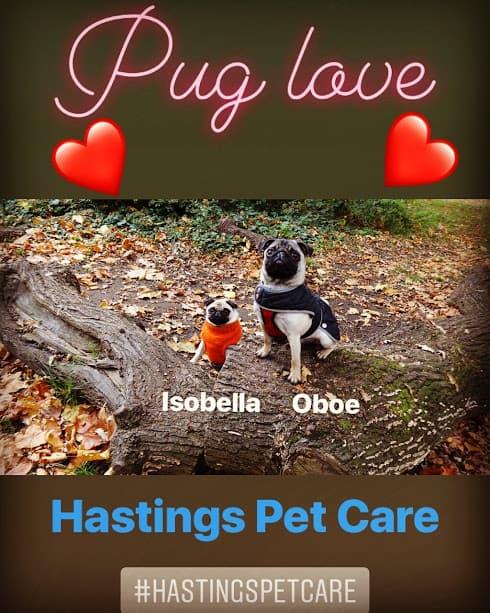 Pug Love - Hastings Pet Care Dog Walkers - St Leonards Fairlight - Walking
