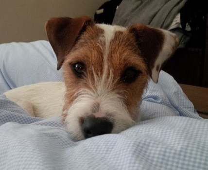 Puppy Care Hastings and St Leonards Experienced