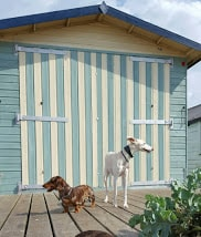 Beach huts St Leonards-on-Sea beach - Dog walking