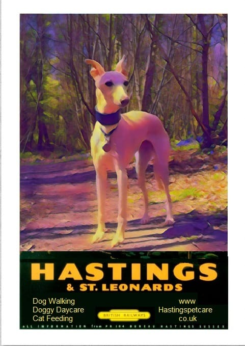 Hastings and St Leonards Dog Walkers - Experienced - Whippets
