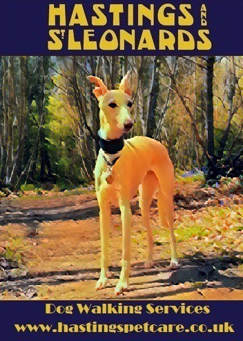 Dog Walkers St Leonards - Hastings Pet Care - Walking