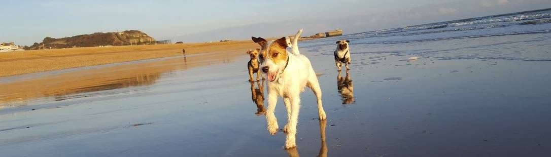 St Leonards Hastings Fairlight Dog Walker East Sussex