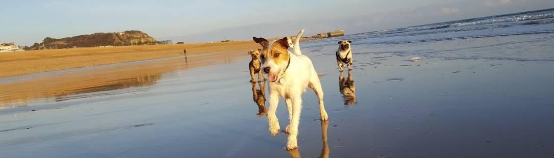 St Leonards Hastings Fairlight Dog Walker East Sussex