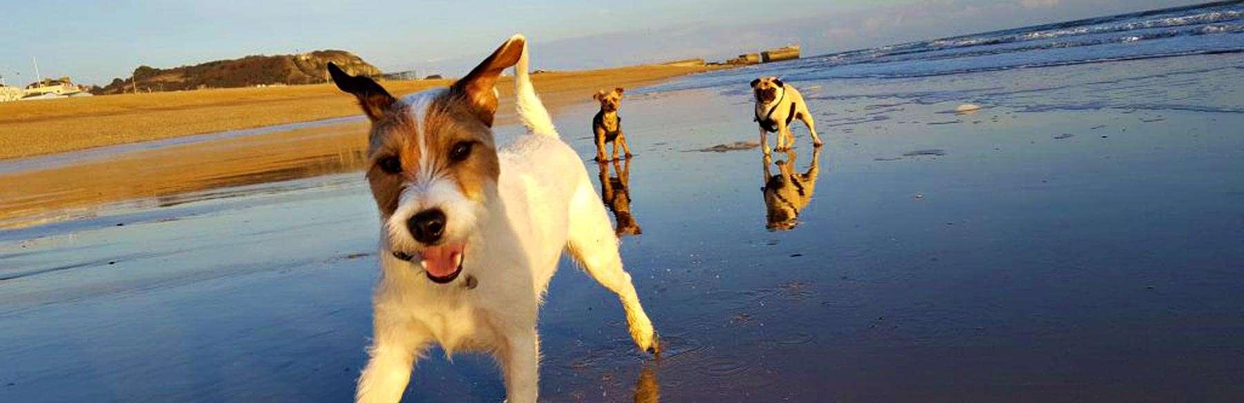 Pelham Beach - Dog Walk - Hastings Pet Care - St Leonards
