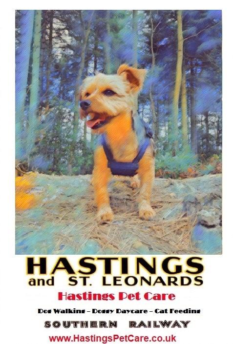 Fairlight Glen - Alfie - Yorkshire Terrier - St Leonards and Hastings Dog Walkers