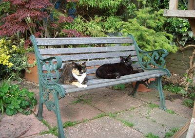 St Leonards and Hastings - Cat Feeding - Bert and Molly