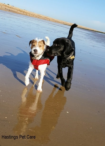 St Leonards and Hastings Dog Walking -George n Reg