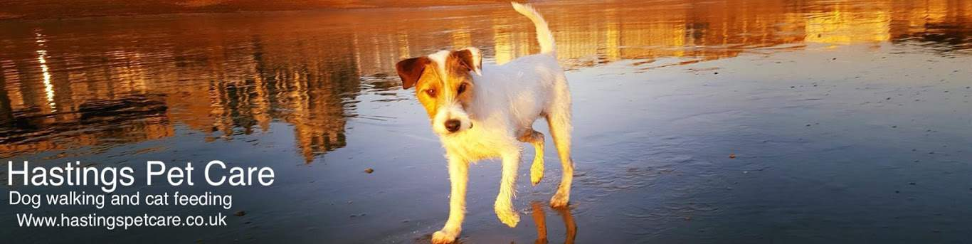 Dog Walking Services - St Leonards on Sea, Hastings and Fairlight