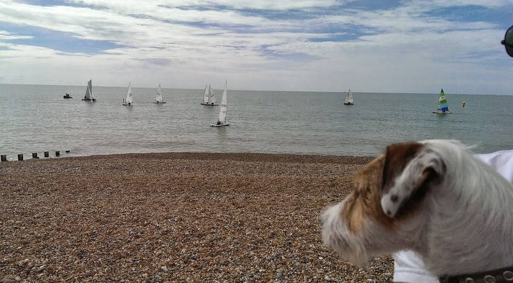 Watching the Boats - Hastings St Leonards 1066 Country Dog Walkers