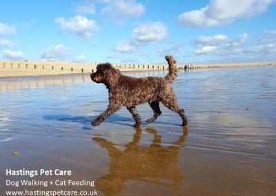Winchelsea Beach - Hastings Pet Care - Dog Walkers