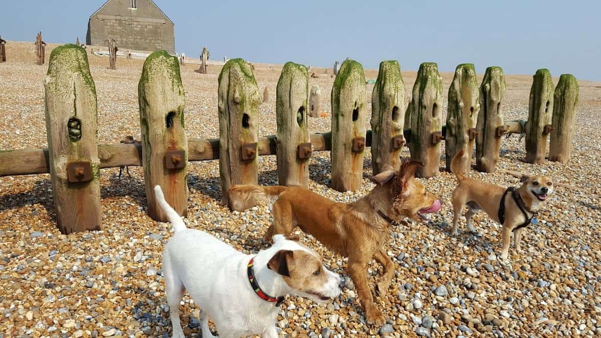 Winchelsea Dog Walker - Hastings