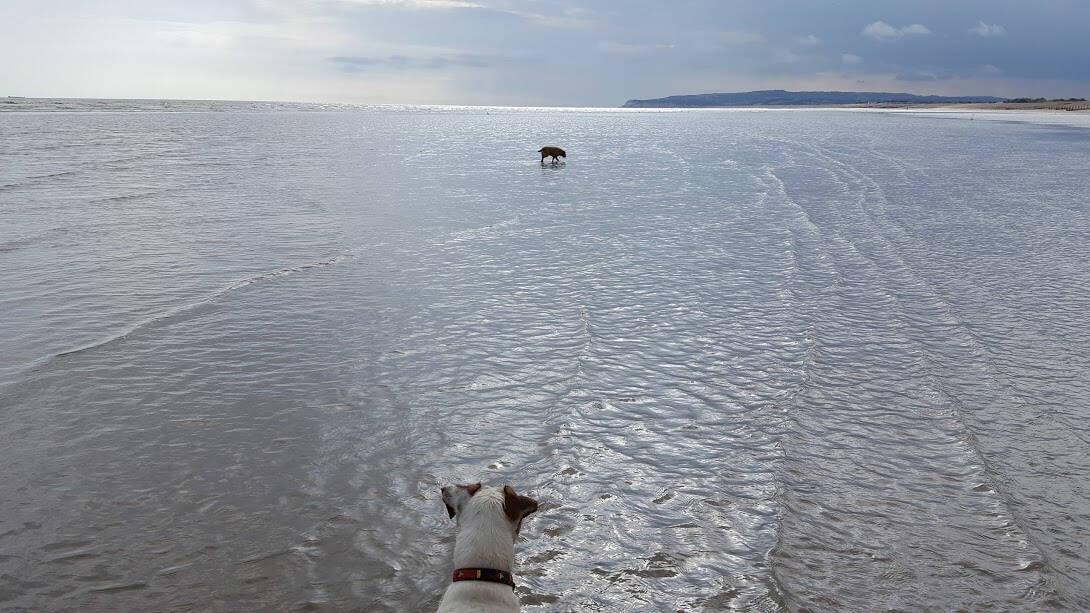 Winchelsea and Pett - Beach - Dog Walking