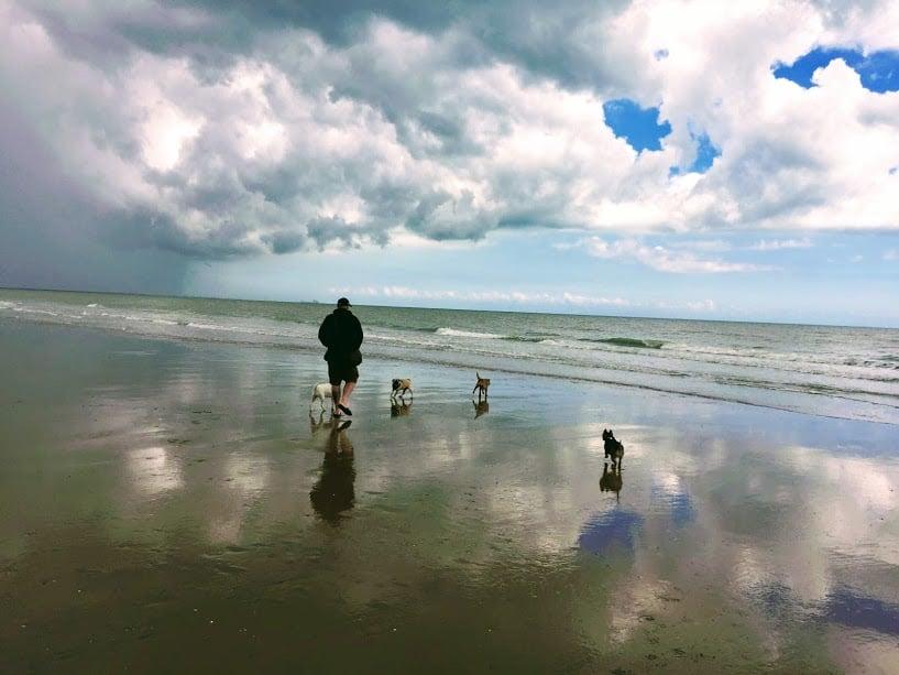 Dog Walk - Hastings Pet Care - St Leonards