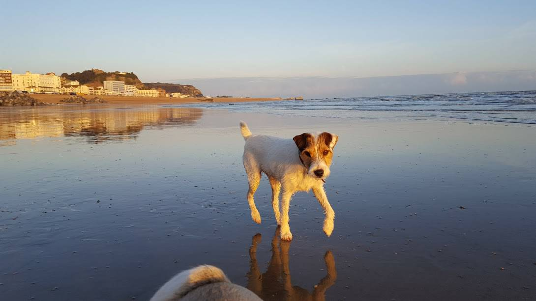 beautiful evening walking dogs - hastings pet care - St Leonards and Fairlight